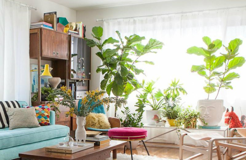 10 cheerful living room ideas with plants covet edition Large living room plants
