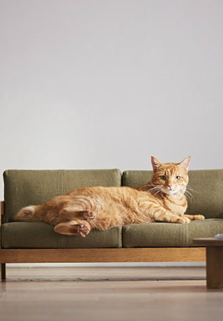 The Tiny Luxury Furniture For Cats That Will Make You Fall in Love