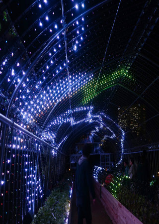 Want to See Something Crazy Check Out This Digital Greenhouse in Tokyo!